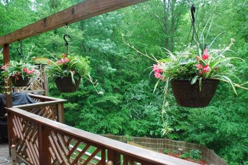 Notice Erin's garden below