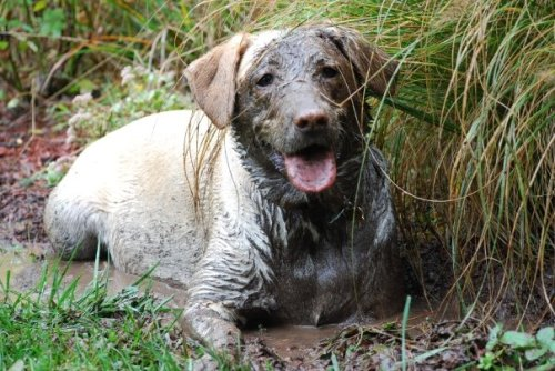 Lucy mud